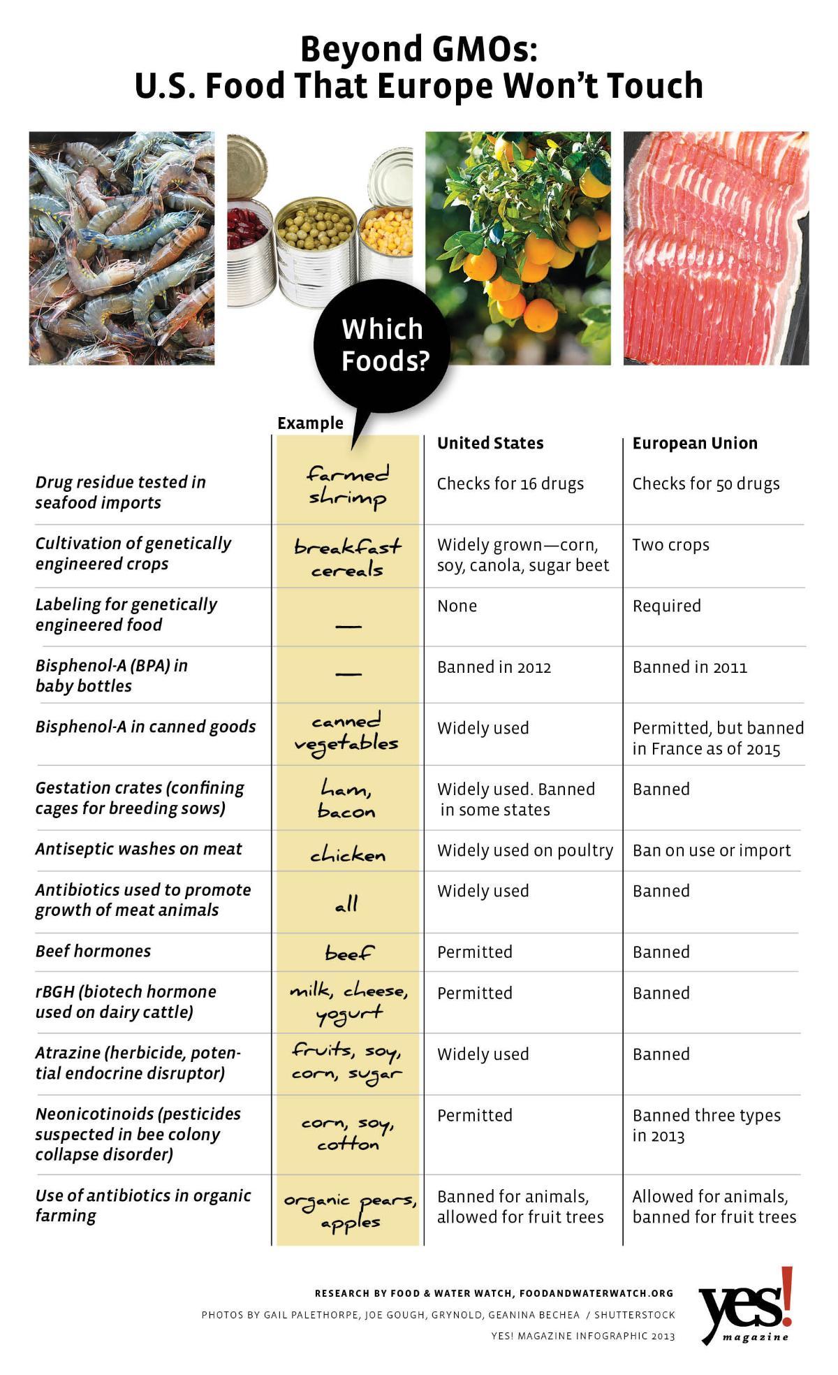 genetically modified food 2 essay